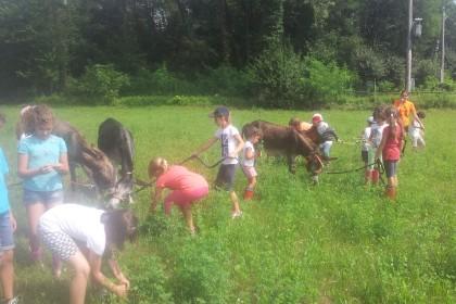 Trekking con l'asino